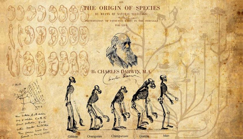 Charles Darwin, Illustration par Kinepipe