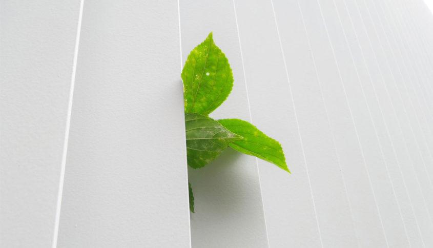 Greenwashing collapswashing